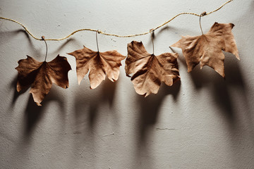 Leaves in a strip on a wall