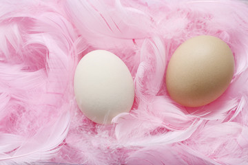 Eggs lying on pink feathers.