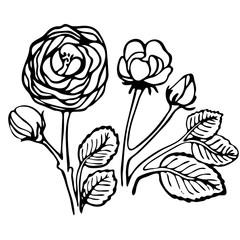 floral illustration with dog rose