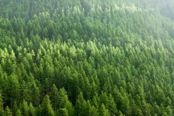 Papiers peints Forets Alpine landscape