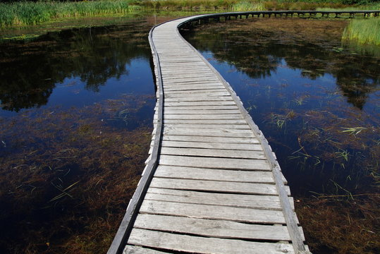 Peaceful path of life - mindfulness tranquility