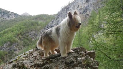 Cane pastore sulle rocce