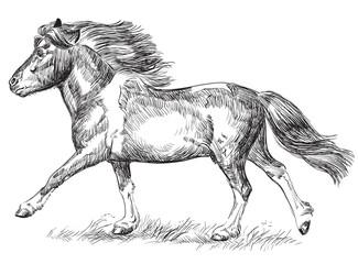 Hand drawing image pony galloping