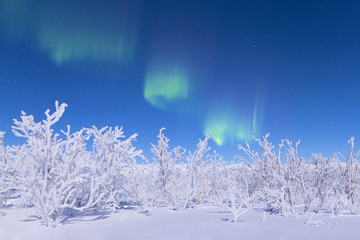 Northern lights turn green the night sky lit by the full moon. Riskgransen, Norbottens Ian, Lapland, Sweden,Europe