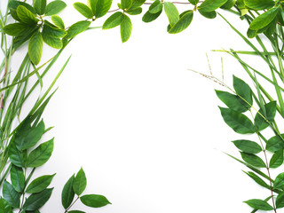 green leaves border isolated on white background