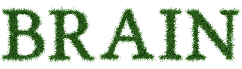 Brain - 3D rendering fresh Grass letters isolated on whhite background.