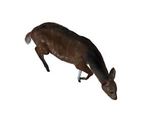 3d illustration of a deer