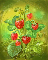 Wild strawberry illustration