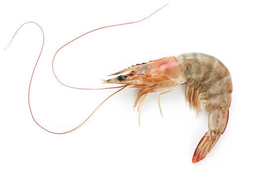 Fresh shrimp isolated on white background. Seafood.