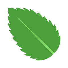 Peppermint / Spearmint mint or mentha leaf flat vector color icon for apps and websites