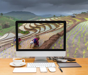 Conceptual image of a workspace with computer desktop on Unidentified Mountaineer planting rice by transplanting rice seedlings