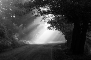 Powerful sun rays cutting through the mist on a road, in the midst of some trees in the shadows