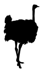 Ostrich vector silhouette isolated on white background.