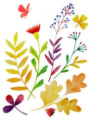 акварельные цветы и растения, набор осенних листьев