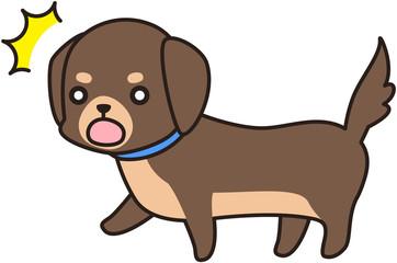 茶色いミニチュアダックスフンド 犬 ドッグ わんわん 散歩 表情