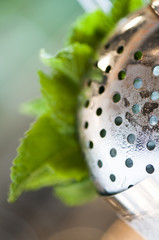 Mint Julep Strainer