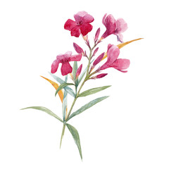 Watercolor floral branch