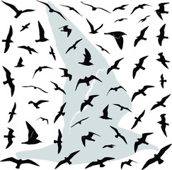 Vector illustration collection of the detailed birds (Seagulls) silhouettes in flight.