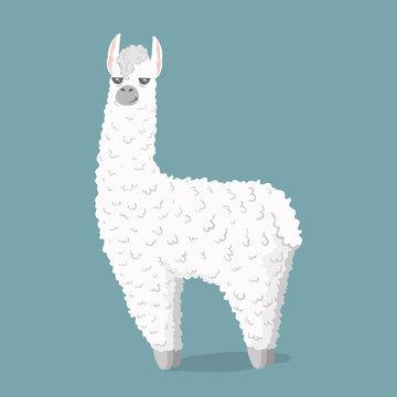 cute cartoon lama alpaca Vector Illustration. unique design for cards, posters, t-shirts, invitations