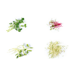 Different types of micro greens on white background. Healthy eating concept of fresh garden produce organically grown as a symbol of health and vitamins from nature. Microgreens closeup.
