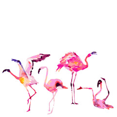 Beautiful flamingos, isolated on a white. Big set.