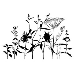 Floral background with meadow grasses, herbs and flowers outlines.