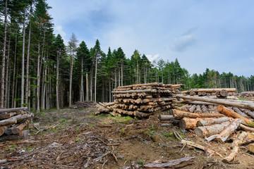 山にある間伐材