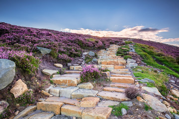Poster Hill Simonside Hills path to the ridge, popular with walkers and hikers they are covered with heather in summer, and are part of Northumberland National Park, overlooking the Cheviot Hills