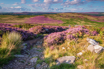 Fotorolgordijn Heuvel Footpath to Simonside Hills, popular with walkers and hikers they are covered with heather in summer, and are part of Northumberland National Park, overlooking the Cheviot Hills