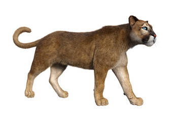 3D Rendering Big Cat Puma on White