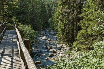 Beautiful view of coniferous forest, river Iskar and wooden bridge in  Rila mountain, Bulgaria, Europe