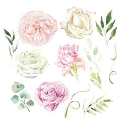 Watercolor set with different roses and leaves. Illustration