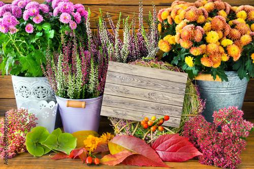 Herbst dekoration stockfotos und lizenzfreie bilder auf bild 169588501 - Herbstdekoration 2017 ...