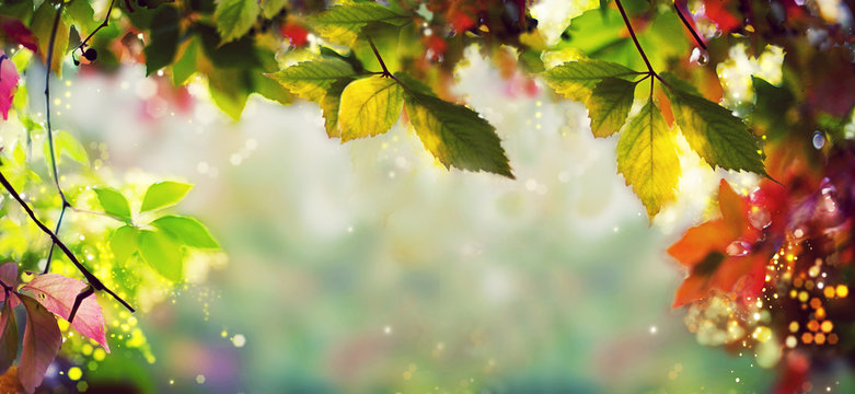Panorama Banner - Colorful autumn / fall leaves - Art work, Bokeh, Lens flares - Text, body, copy space