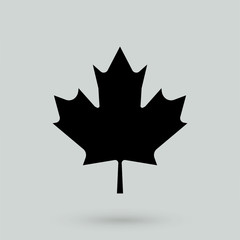 Maple Leaf vector icon.