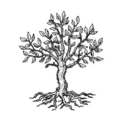 Silhouette of a tree with leaves, on a white background.Vector