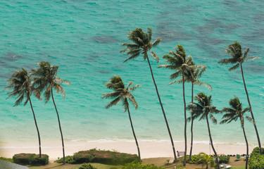 Palm Trees at the Beach of Waimanalo, Hawaii