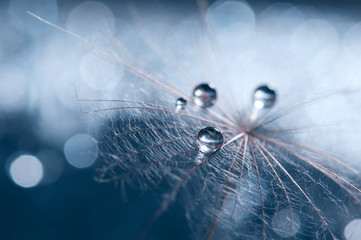 A beautiful and artistic image of a dandelion with drops on a blue background.