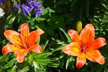 Garden flowers.A beautiful bouquet of garden festive flowers.