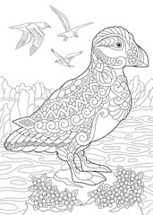 Coloring page of puffin, a hole-nesting auk (seabird) of northern and Arctic waters. Freehand sketch drawing for adult antistress coloring book in zentangle style.