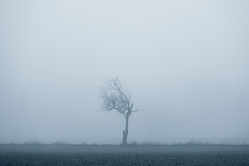 A single tree in the fog without leaves