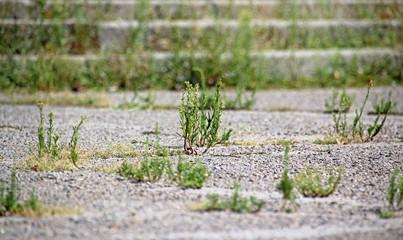 Plants growing through cracks in the asphalt.