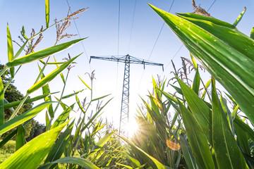 Stromleitung über Maisfeld mit Sonne und Lens Flare als Symbol für Ökostrom