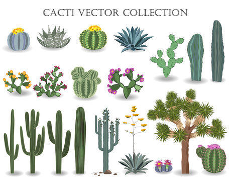 Cacti vector collection. Saguaro, agave, joshua tree, and prickly pear.