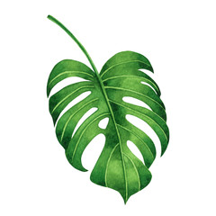 Watercolor painting tropical green leaves,palm leaf isolated on white background.Watercolor hand painted illustration tropical exotic leaf for wallpaper vintage Hawaii style pattern.With clipping path