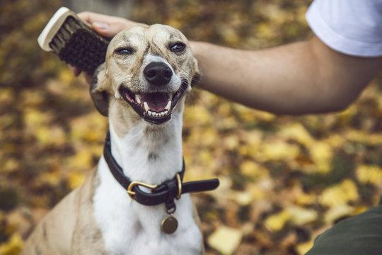 Lovely Portrait of Smiling Dog