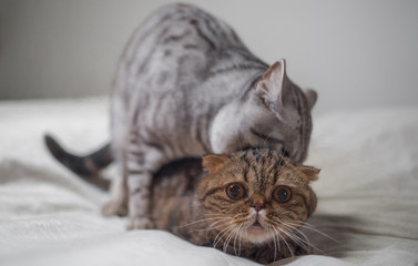Cats sex scene