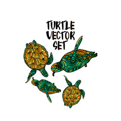 Turtle illustration vector set.