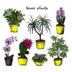 House Plants - Set Of 7 Color Hand-Drawn Plants