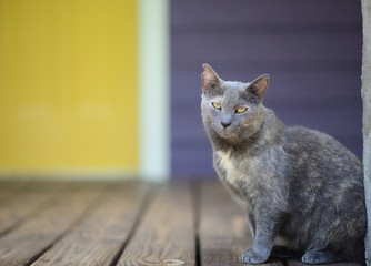 Grey cat with yellow eye on porch with yellow door.